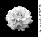 Black And White Flower Rose. A...