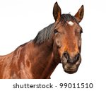 Stock photo portrait of a brown horse isolated on white background 99011510