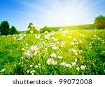 Field Of Grass. Meadow Green...