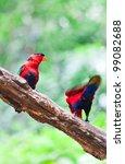 red parrots bird. | Shutterstock . vector #99082688