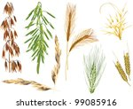 illustration with cereals...   Shutterstock .eps vector #99085916