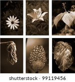 flower | Shutterstock . vector #99119456