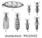 termites  vintage engraved... | Shutterstock .eps vector #99125423
