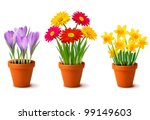 spring colorful flowers in pots ... | Shutterstock .eps vector #99149603