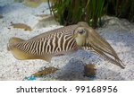 Cuttlefish In Aquarium With...