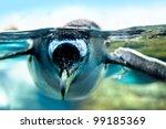 Penguin Is Under Water Looking...