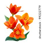 Stock photo a flower of liliaceae tulip bouquet 99222779