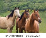 Three Horses Standing In A Row