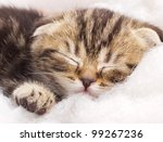 Stock photo closeup portrait of a cute sleeping kitten 99267236