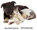 Stock photo puppy and cat 99290558
