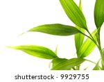 Bamboo Leaves Isolated On Whit...