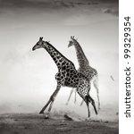 giraffes on the run  artistic... | Shutterstock . vector #99329354