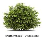 common hazel bush isolated on... | Shutterstock . vector #99381383