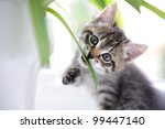 Stock photo cat playing with leaves 99447140
