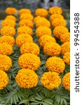 Marigold flowers on local market - stock photo