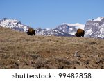 bison and mountains | Shutterstock . vector #99482858
