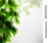 beautiful green leaves  eco... | Shutterstock . vector #99549353
