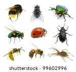 set of insects on white | Shutterstock . vector #99602996