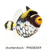 Marine Fish  Clown Triggerfish  ...