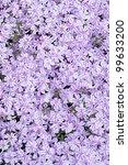 full frame view of a perennial... | Shutterstock . vector #99633200