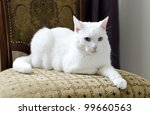 Stock photo white cat with different eyes lying on a chair 99660563