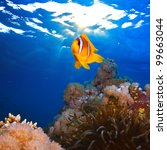 underwater photo coral garden with anemone of yellow clownfish - stock photo