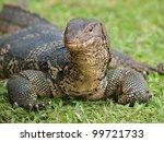 closeup of monitor lizard  ...   Shutterstock . vector #99721733