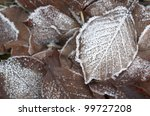 autumn leaves partly covered with hoarfrost - stock photo