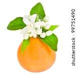 Orange Tree Flowers On A Orange ...
