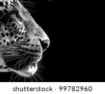 black and white isolated... | Shutterstock . vector #99782960