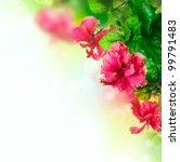Hibiscus Flower Border Design...