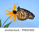 A Beautiful Monarch Butterfly ...