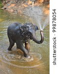 Asia Elephant Taking A Bath In...