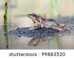 agile frog  rana dalmatina  on...   Shutterstock . vector #99883520