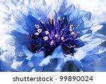 blue flower | Shutterstock . vector #99890024