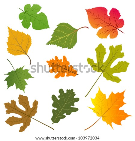 the leaves of trees vector