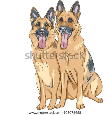 vector portrait of two dog