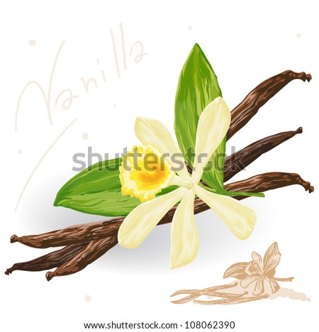 world spices vanilla pods and