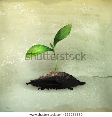 plant  old style vector