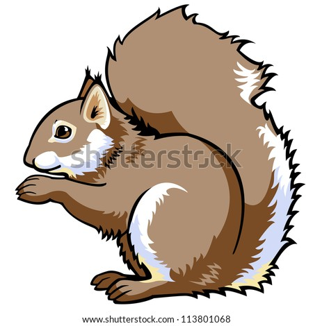 squirrel vector side view image