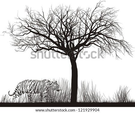 vector illustration tiger in
