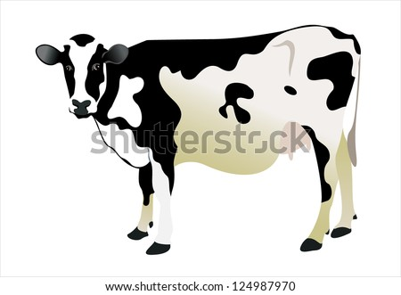 cow isolated on a white