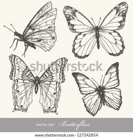 butterfly set insect sketch