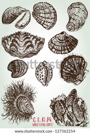 hand drawn clam vector set