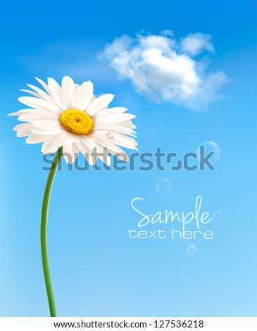 beautiful white daisy in front