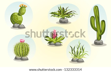 collection of cacti and desert