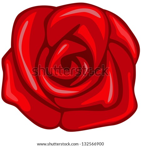 vector rose isolated on white