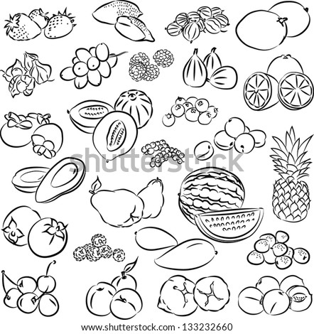vector illustration of  fruits