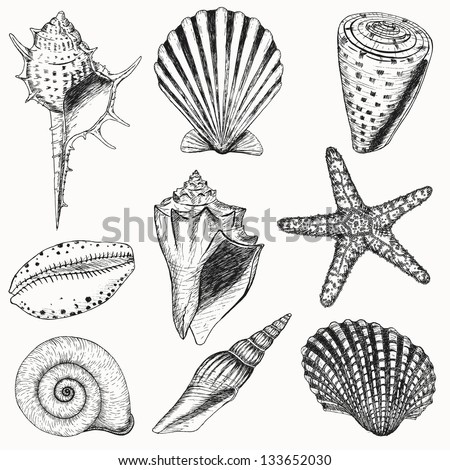 shells collection vector set