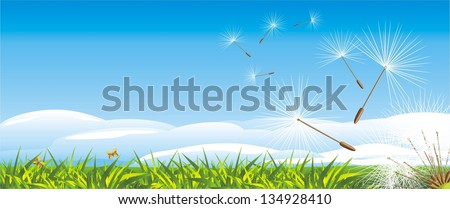 fluff of dandelion on the